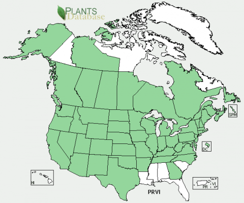 States highlighted in green are where Prunus virginiana plants can be found..