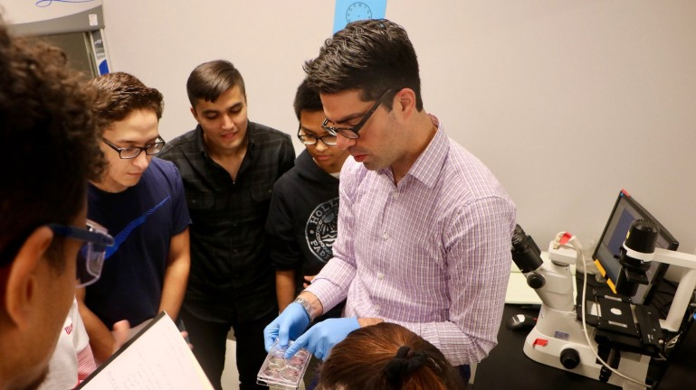 Professor Will Conrad prepares students to observe the effect of a drug on cancer cell growth.