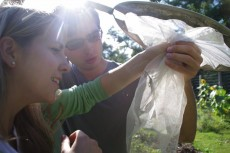ryan vlaar '14 and claire perrott '12 catch the mantis and claim her as a pet for environmental studies (photo by liz birn...