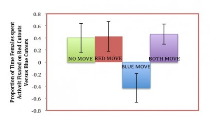 Figure 3. The proportion of time female betta fish spent actively fixated on red cutouts over blue cutouts. Error bars represent standard error.