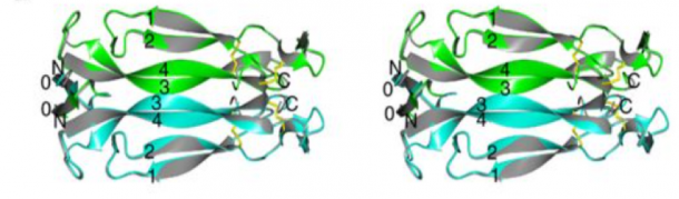 Figure 1: Unbound IL-17A is highly symmetric a) Wall-Eye stereo presentation of the overall structure of the unbound IL-17A dimer shown in ribbons (chain A, green; chain B, cyan), superimposed with its two-fold symmetry related dimer (gray). Least square superimposition was carried out using program LSQMAN (17). The N- and C termini and the secondary structural elements are labeled. Disulfide bonds are shown as yellow sticks. The same coloring scheme is used throughout this report, unless otherwise noted. Molecular pictures are prepared using program PyMol [18].