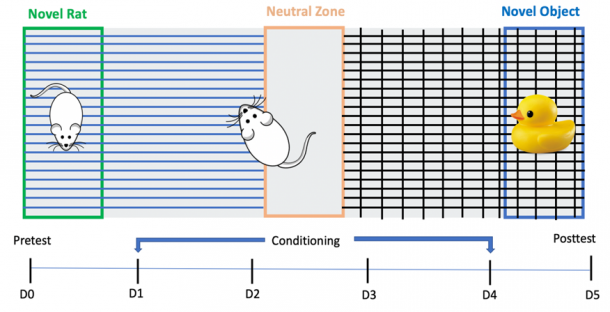 Figure 9. Schematic drawing of the Conditioned Place Preference test (CPP) and the timeline. All rats were pre-tested on PND53 and then randomly assigned to groups with constant placement of a novel rat and a novel object for 4 consecutive days. On PND58 all rats were tested with the absence of both the novel object and a novel rat and their zone preference was compared to the pre-test data.