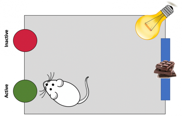Figure 10. Appetitive Conditioning with OFF1, ON, OFF2. Aversive Light Stimulus. Rats were trained inside the chambers until they all reached 50 pellets with fixed ratio 2 (FR2).  Active and inactive nose poke holes were placed opposite to the reward (chocolate) dispenser.