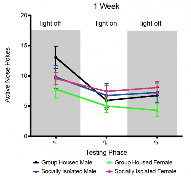 Figure 14.1. No significant reduce in nose poking during the anxiogenic condition compared to no light condition. Combined group (±SEM) mean of 1-week SI and GH male and female rats versus the 4-week SI and GH male and female rats.