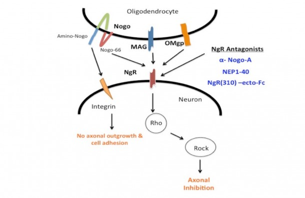 Parked regeneration inhibited sexual dysfunction