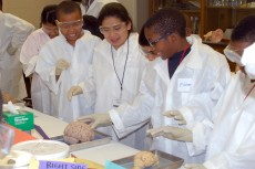 The young children enjoyed exploring with their own hands the complex anatomy of the human brain!
