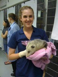 Terese (Beth) Noe '10 at UIUC Vet Med Wildlife Medical Clinic with an opossum being treated for a degloving injury