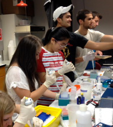 Hauer (center) working with other students in Dr. Kirk's lab