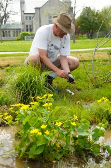 Professor Jeffrey Sundberg adds more plants to the wet area of Revery Prairie, where marsh marigold is already established.